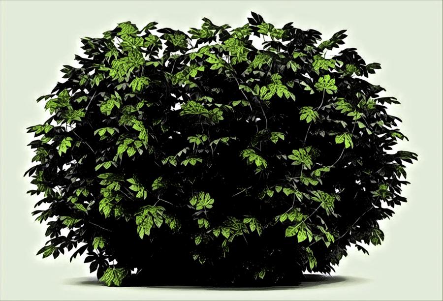 Totally an apple bush.